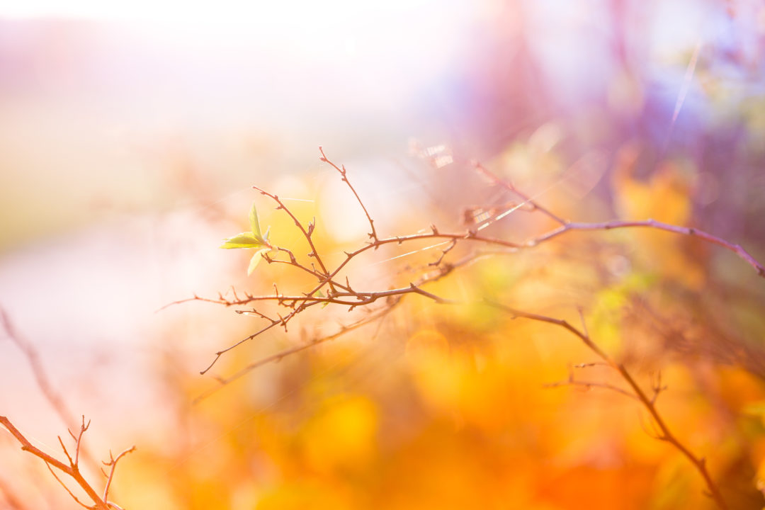 abstract-colors-of-autumn-picjumbo-com